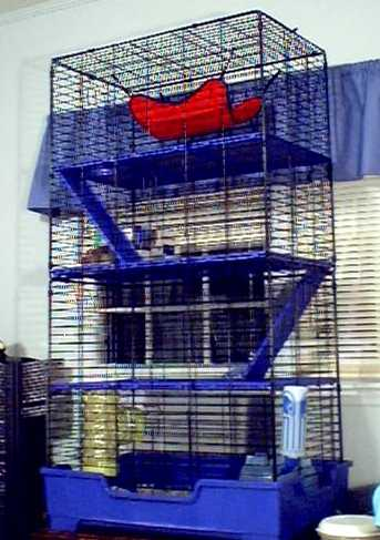 the four-story ferret cage